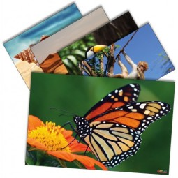 Animals and Nature Poster Set (Set of 12)