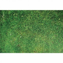 STEM Play Mat: Grass