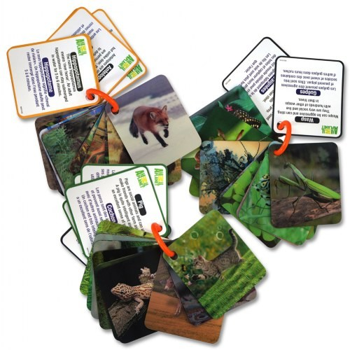 Animal Planet 3D Creatures Flash Cards
