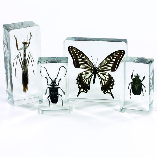Animal & Plant Specimen Set: Insect Set of 4